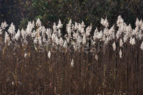 Préri mező fű természet mezők kívül Stock fotó © sbonk