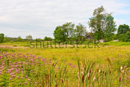 Old, Ruined Barn in Countryside Stock photo © sbonk