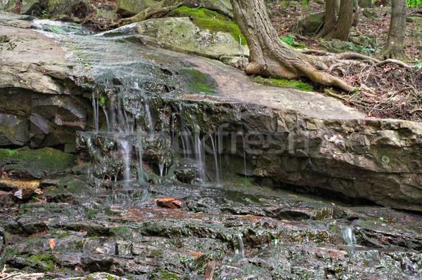 Water on Rocks in Forest Stock photo © sbonk