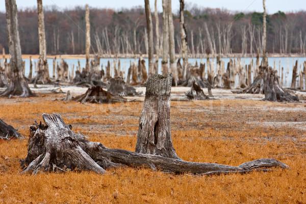 Dead Trees Stock photo © sbonk