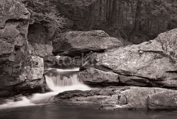 Waterfall and forest in B&W Stock photo © sbonk