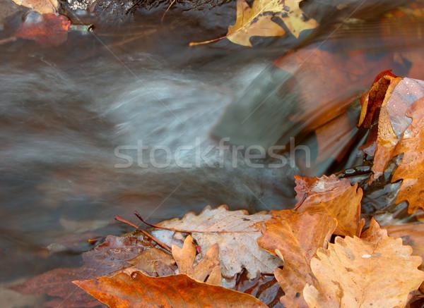 Wody pozostawia strona strumienia mały wodospad Zdjęcia stock © sbonk