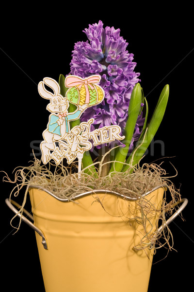Hyacinth and Happy Easter Sign Stock photo © sbonk