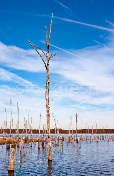 Dead Trees in the Water Stock photo © sbonk