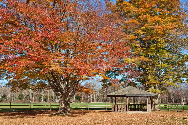 Najaar houten park bomen tonen vallen Stockfoto © sbonk
