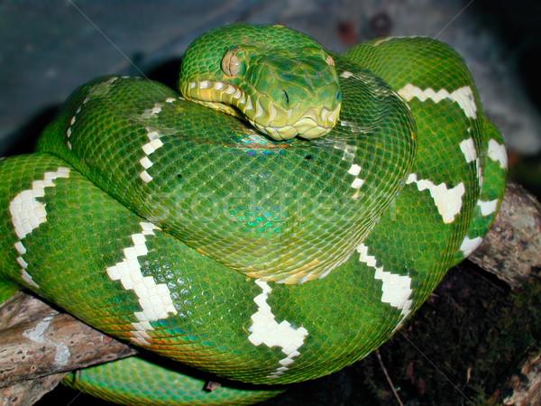 Smeraldo albero natura verde animali Foto d'archivio © sbonk