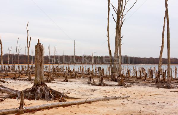 Dead Trees Around a Lake Stock photo © sbonk