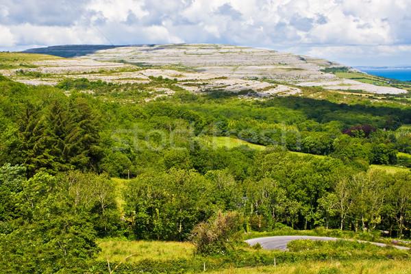 アイルランド 風景 木 道路 フォアグラウンド 丘 ストックフォト © sbonk