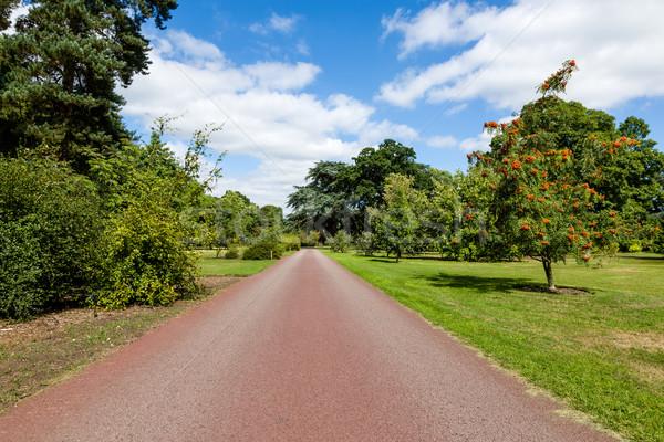 Caminho belo verão jardim luz do sol Foto stock © scheriton