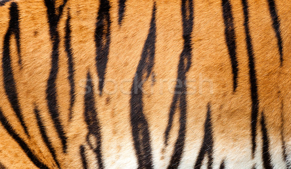 Real Tiger Fur Texture Striped Pattern Background Stock photo © scheriton