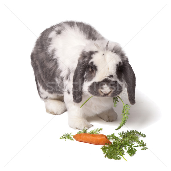 Grey and White Bunny Rabbit Eating Carrot and Greens Stock photo © scheriton