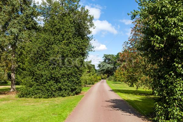 Path through Beautiful Summer Garden Stock photo © scheriton