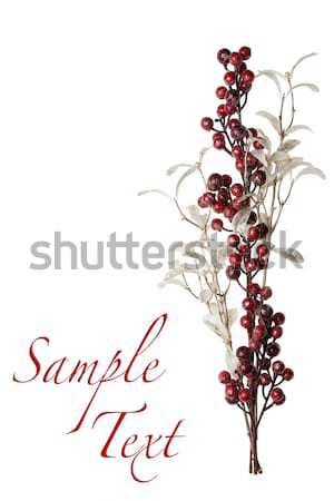 Sparkly Red and Silver Berries on Branch Isolated Background Stock photo © scheriton