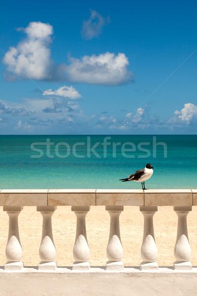 Ensoleillée tropicales séance clôture Caraïbes marin Photo stock © scheriton
