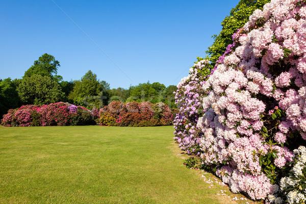 Virág bokrok napos kert gyönyörű fák Stock fotó © scheriton