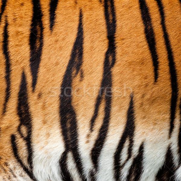 Real Live Tiger Fur Stripe Pattern Background Stock photo © scheriton