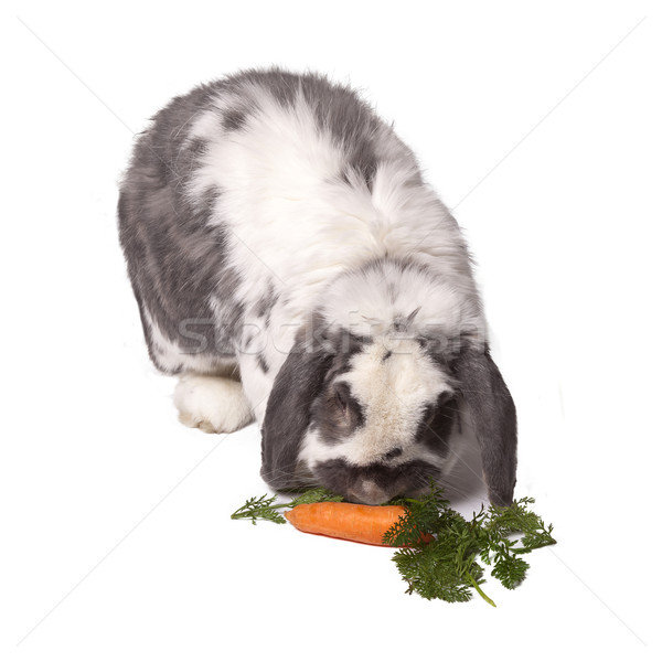 Cute Grey and White Rabbit Bending Down to Eat Carrot and Greens Stock photo © scheriton