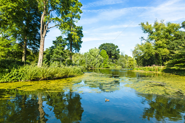 Lush Green Woodland Park Reflecting in Tranquil Pond  Stock photo © scheriton