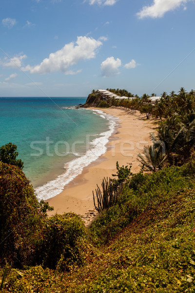 Sunny Tropical Caribbean Beach Landscape Stock photo © scheriton