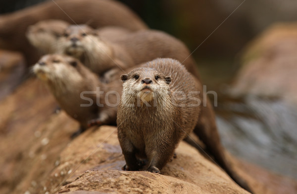 Grupo natureza animal Ásia rochas Foto stock © scooperdigital
