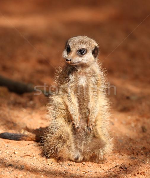 Portre genç doğa hayvan kürk sevimli Stok fotoğraf © scooperdigital