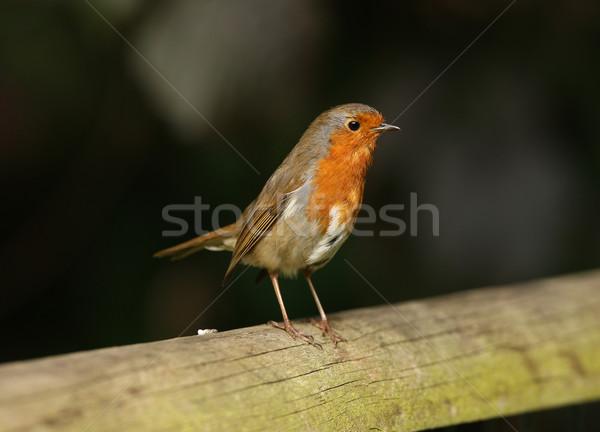 Portrait jeunes arbre jardin rouge animaux Photo stock © scooperdigital