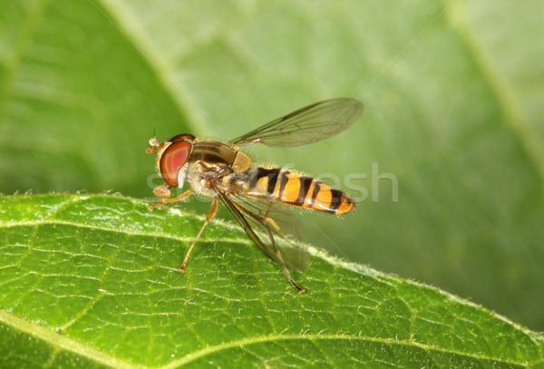 Vliegen bloem natuur insect vleugel Stockfoto © scooperdigital