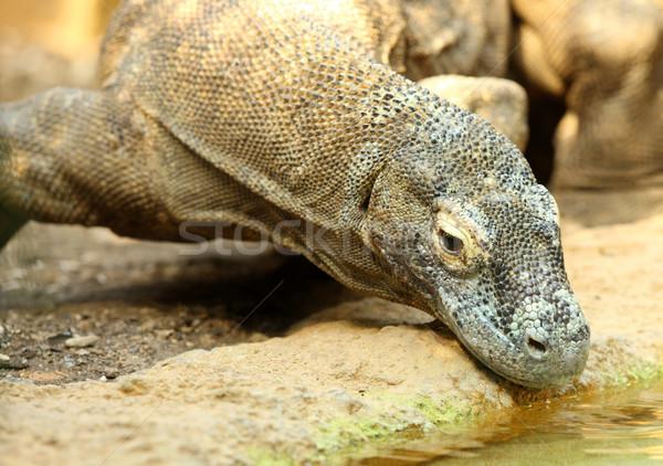 Dragon portrait peau lézard échelles monstre Photo stock © scooperdigital