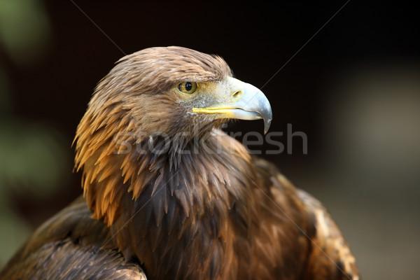 орел портрет женщины призыв тесные Сток-фото © scooperdigital