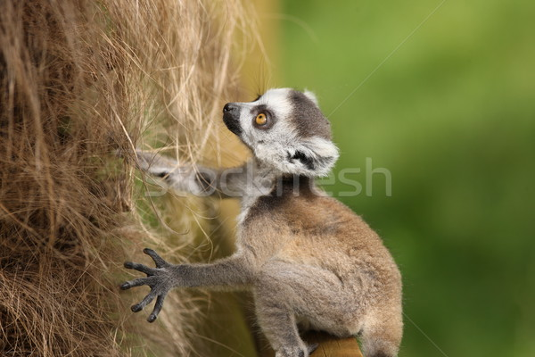 Bebek öğrenme maymun halka hayvan Stok fotoğraf © scooperdigital