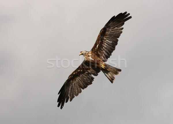 赤 カイト 飛行 眼 白 ストックフォト © scooperdigital