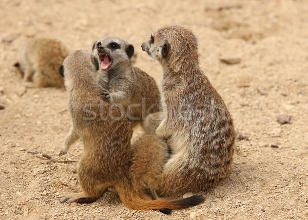 Olhos natureza deserto rocha animal africano Foto stock © scooperdigital