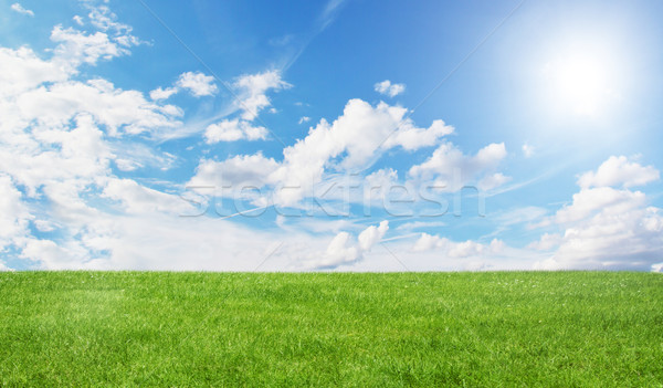 Green field and blue sky Stock photo © sdecoret