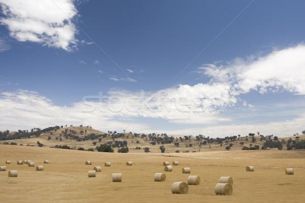 Széna ausztrál farm tájkép száraz fű Stock fotó © sdenness