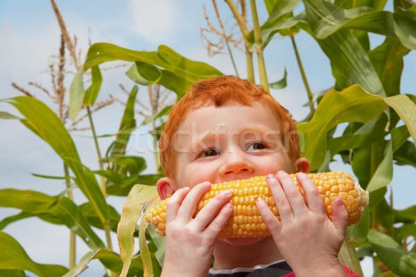 Młody chłopak jedzenie świeże kukurydza ogród niebieski Zdjęcia stock © sdenness