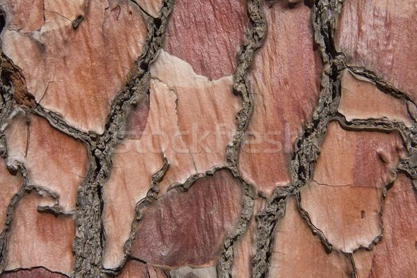 Drzewo kory tekstury czerwony Zdjęcia stock © sdenness