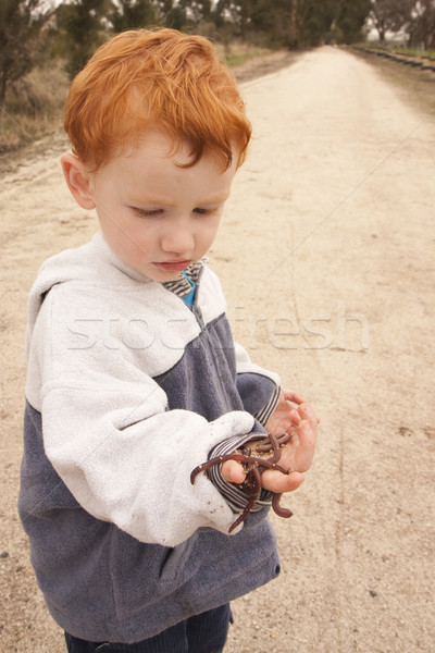 Boy examining handful of worms Stock photo © sdenness