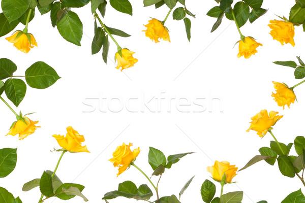 Rózsa virág irodaszer keret citromsárga egyezség Stock fotó © sdenness