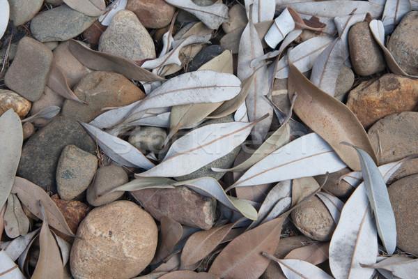Kövek levelek textúra kicsi háttér kő Stock fotó © sdenness