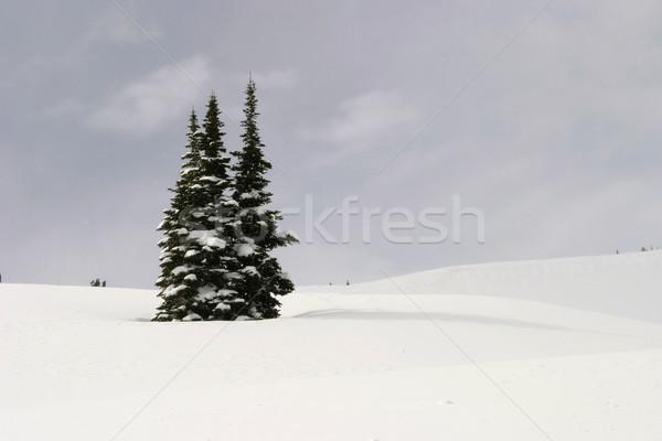 Three Fir Trees In Snow Stock photo © searagen