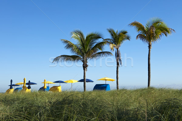 Palm Trees With Umbrellas Stock photo © searagen