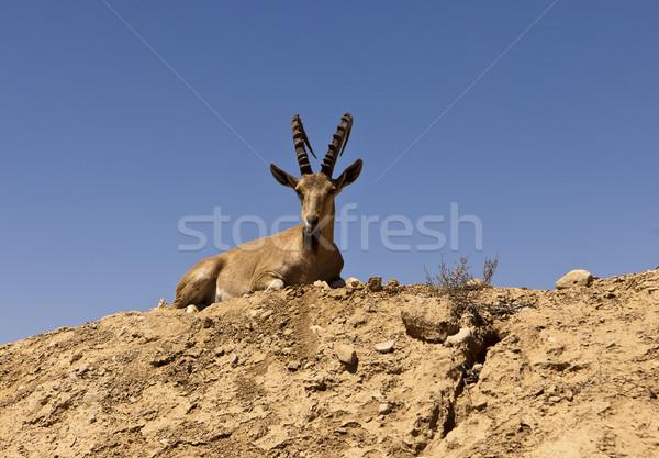 Domb vad férfi lefelé park sivatag Stock fotó © searagen
