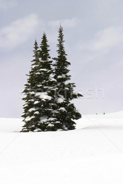 Three Snowy Trees Stock photo © searagen