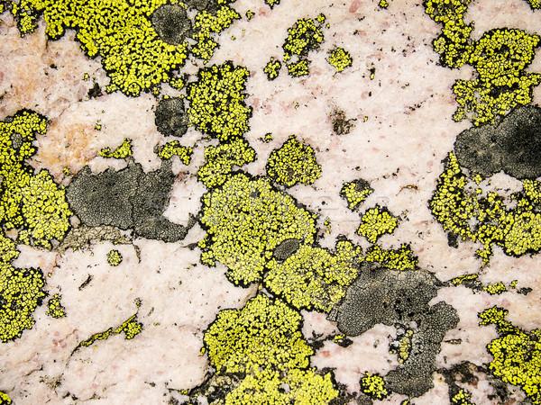 Lichen And Rose Quartz Abstract Stock photo © searagen
