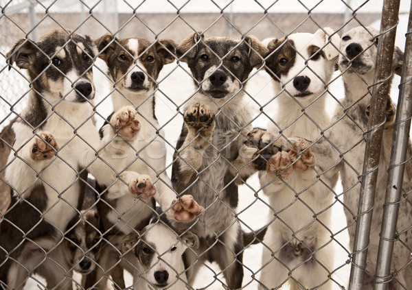 Chien chiots sept formation chiens stand Photo stock © searagen