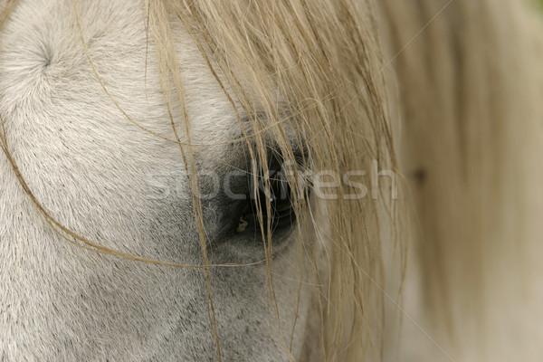 Horse Eye And Mane Stock photo © searagen