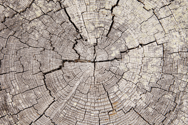 Driftwood Tree Rings With Cracks Stock photo © searagen
