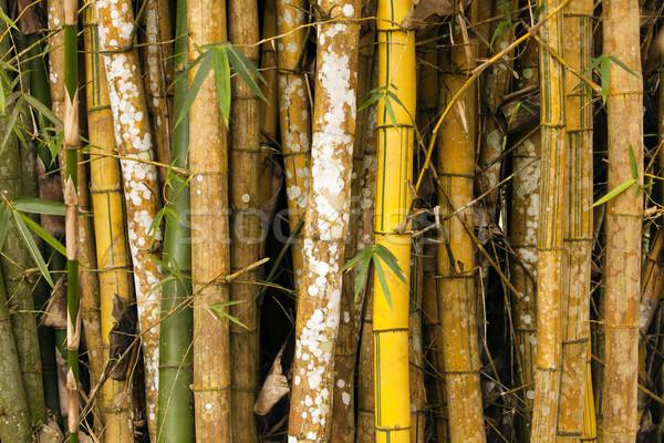Bamboe bosje details klein mooie natuur Stockfoto © searagen