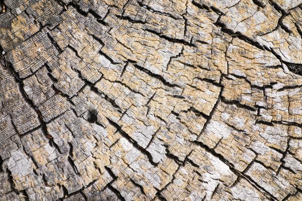 Driftwood charakter streszczenie starych pęknięcia centrum Zdjęcia stock © searagen