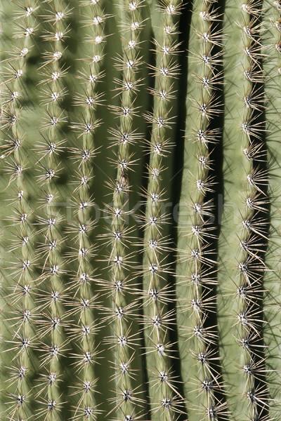 Cactus Spine Pattern Stock photo © searagen
